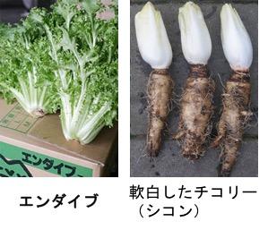 f:id:yachikusakusaki:20170924023823j:plain