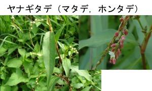 f:id:yachikusakusaki:20170925233516j:plain