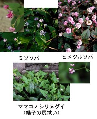 f:id:yachikusakusaki:20170925234600j:plain