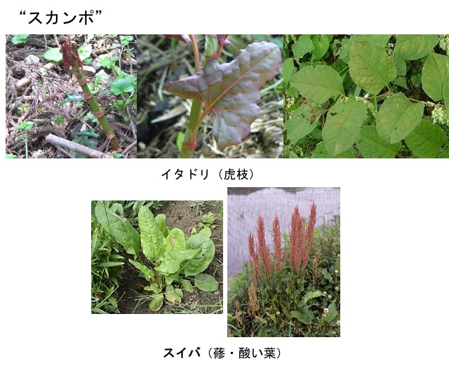 f:id:yachikusakusaki:20170925235407j:plain