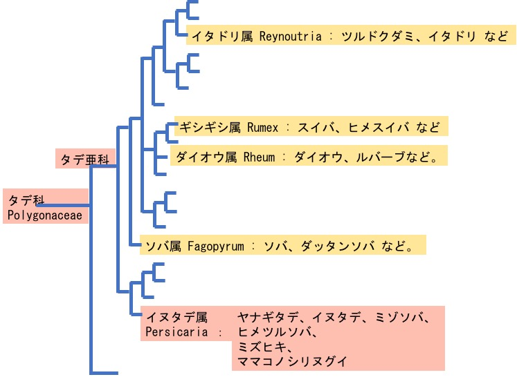 f:id:yachikusakusaki:20170925235824j:plain