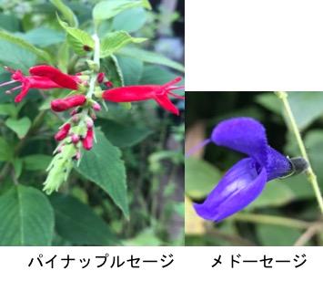 f:id:yachikusakusaki:20170927232221j:plain