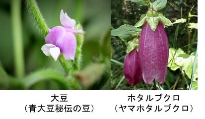 f:id:yachikusakusaki:20170927232251j:plain