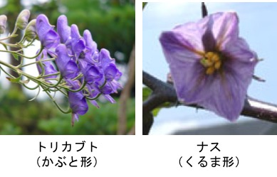 f:id:yachikusakusaki:20170928002242j:plain