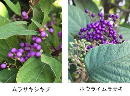 f:id:yachikusakusaki:20170928004901j:plain