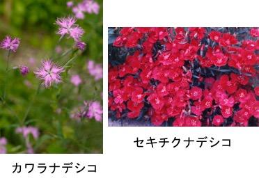 f:id:yachikusakusaki:20171003222028j:plain