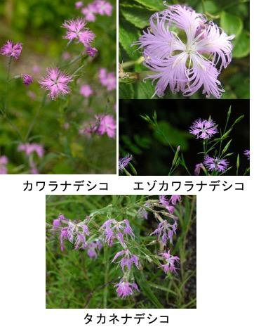 f:id:yachikusakusaki:20171004230202j:plain