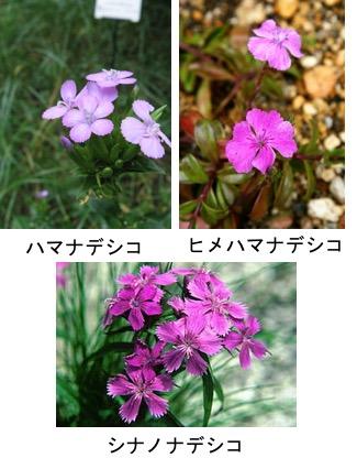 f:id:yachikusakusaki:20171004230257j:plain