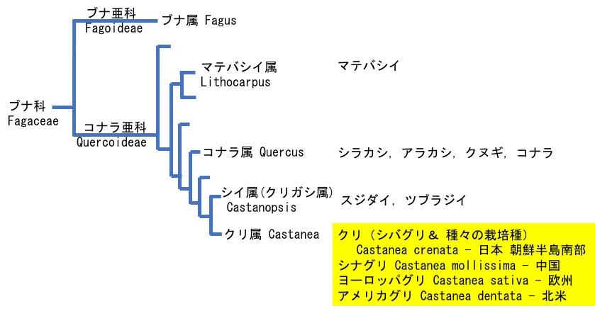f:id:yachikusakusaki:20171011022457j:plain
