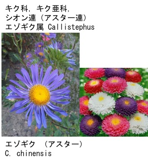 f:id:yachikusakusaki:20171012034643j:plain