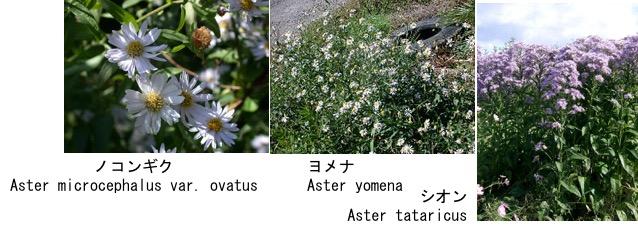 f:id:yachikusakusaki:20171012230211j:plain