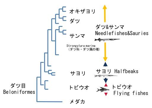 f:id:yachikusakusaki:20171015014628j:plain