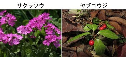 f:id:yachikusakusaki:20171016010755j:plain