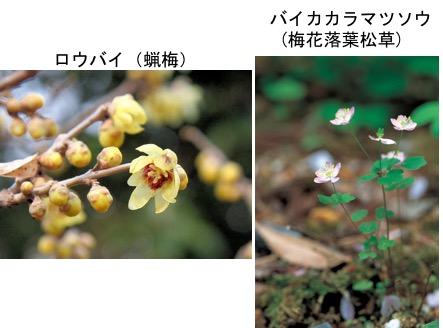 f:id:yachikusakusaki:20171016234632j:plain