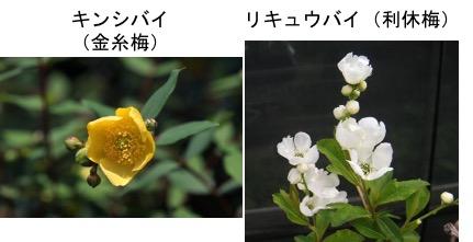 f:id:yachikusakusaki:20171016234759j:plain