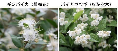 f:id:yachikusakusaki:20171016234955j:plain
