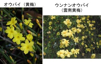 f:id:yachikusakusaki:20171016235221j:plain
