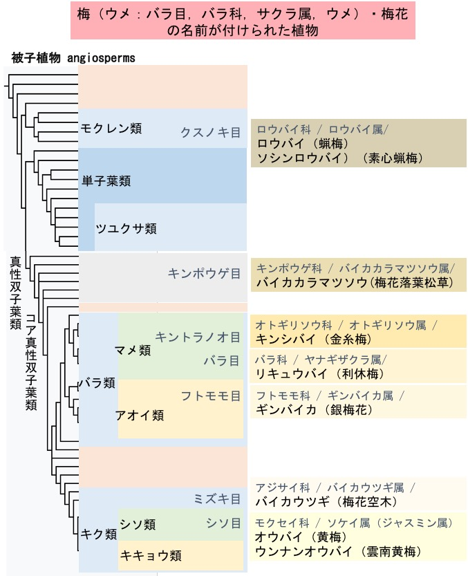 f:id:yachikusakusaki:20171017002051j:plain