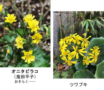 f:id:yachikusakusaki:20171025010636j:plain