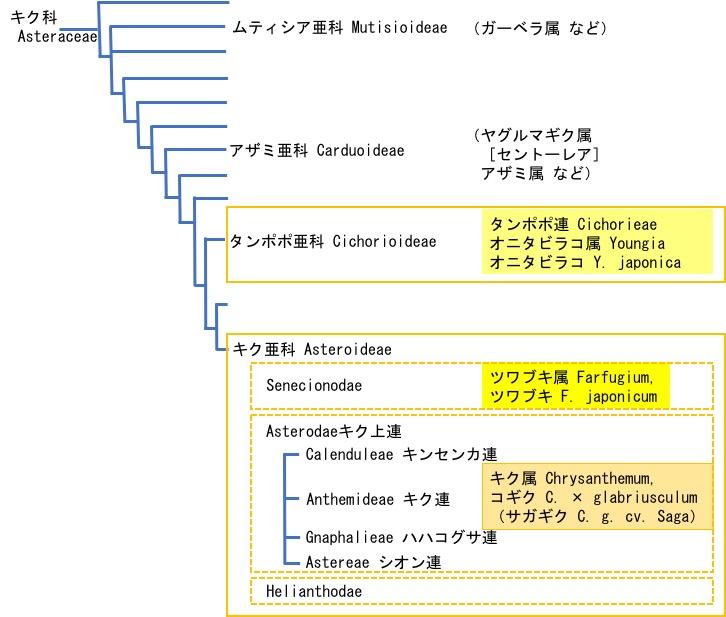 f:id:yachikusakusaki:20171025011327j:plain
