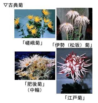 f:id:yachikusakusaki:20171025012646j:plain