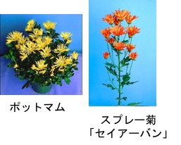 f:id:yachikusakusaki:20171025215743j:plain