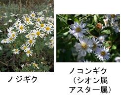 f:id:yachikusakusaki:20171025215812j:plain