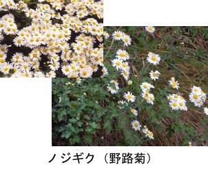 f:id:yachikusakusaki:20171027234429j:plain
