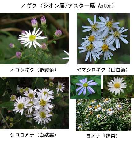 f:id:yachikusakusaki:20171028002324j:plain
