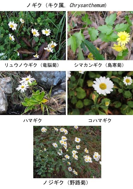 f:id:yachikusakusaki:20171028003449j:plain