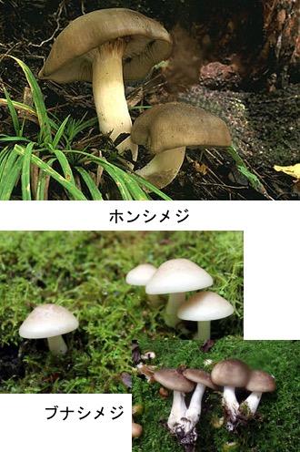 f:id:yachikusakusaki:20171102012509j:plain