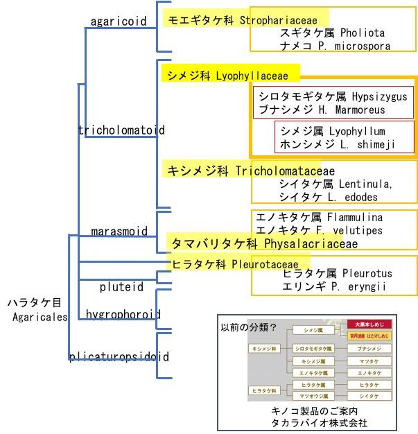 f:id:yachikusakusaki:20171102015749j:plain