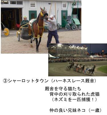 f:id:yachikusakusaki:20171107172710j:plain