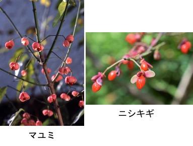 f:id:yachikusakusaki:20171110224223j:plain