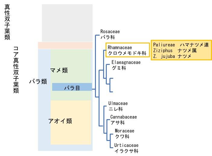 f:id:yachikusakusaki:20171116012525j:plain