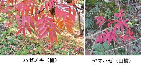 f:id:yachikusakusaki:20171118000418j:plain