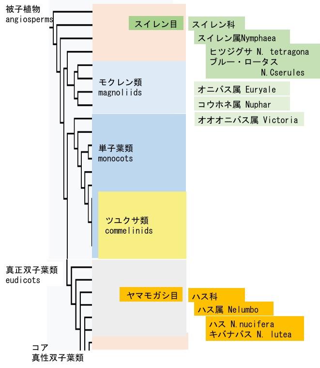 f:id:yachikusakusaki:20171119203912j:plain