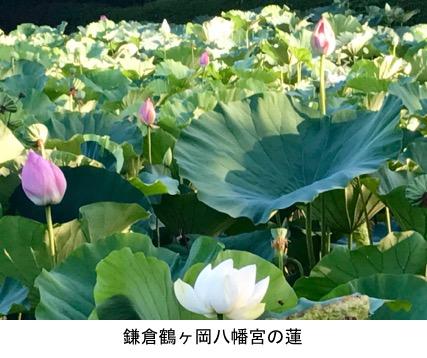 f:id:yachikusakusaki:20171119212643j:plain