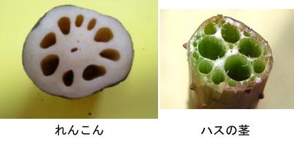 f:id:yachikusakusaki:20171119224749j:plain