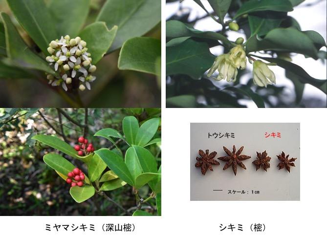 f:id:yachikusakusaki:20171124231930j:plain
