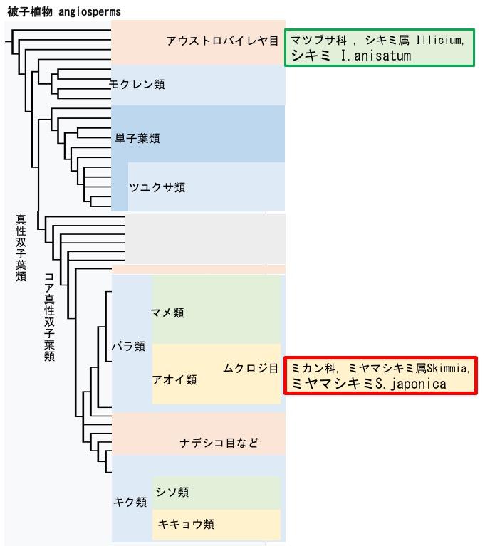 f:id:yachikusakusaki:20171124233837j:plain