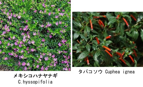 f:id:yachikusakusaki:20171130003512j:plain