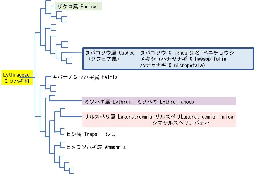f:id:yachikusakusaki:20171130013706j:plain