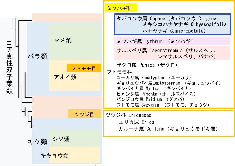 f:id:yachikusakusaki:20171130014020j:plain