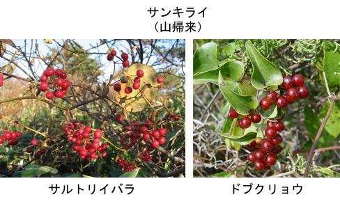 f:id:yachikusakusaki:20171204013711j:plain