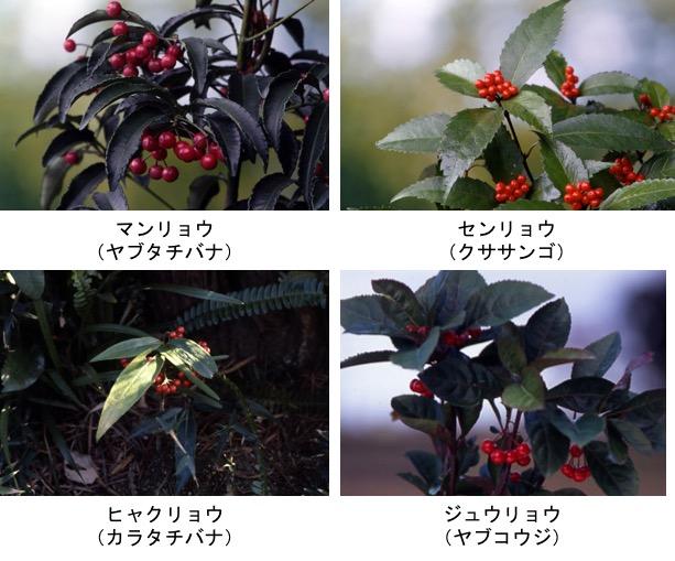 f:id:yachikusakusaki:20171204014505j:plain