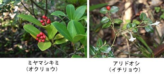 f:id:yachikusakusaki:20171204015401j:plain