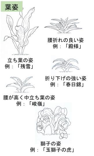 f:id:yachikusakusaki:20171207003317j:plain