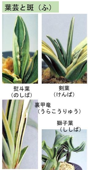 f:id:yachikusakusaki:20171207003511j:plain