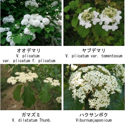 f:id:yachikusakusaki:20171209003846j:plain